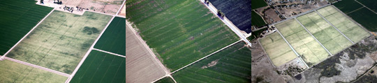 aerial agriculture photography