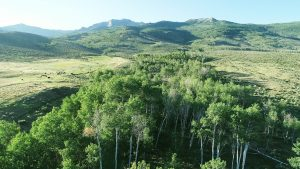 Aerial Nevada Ranch Video - Aspen Tree
