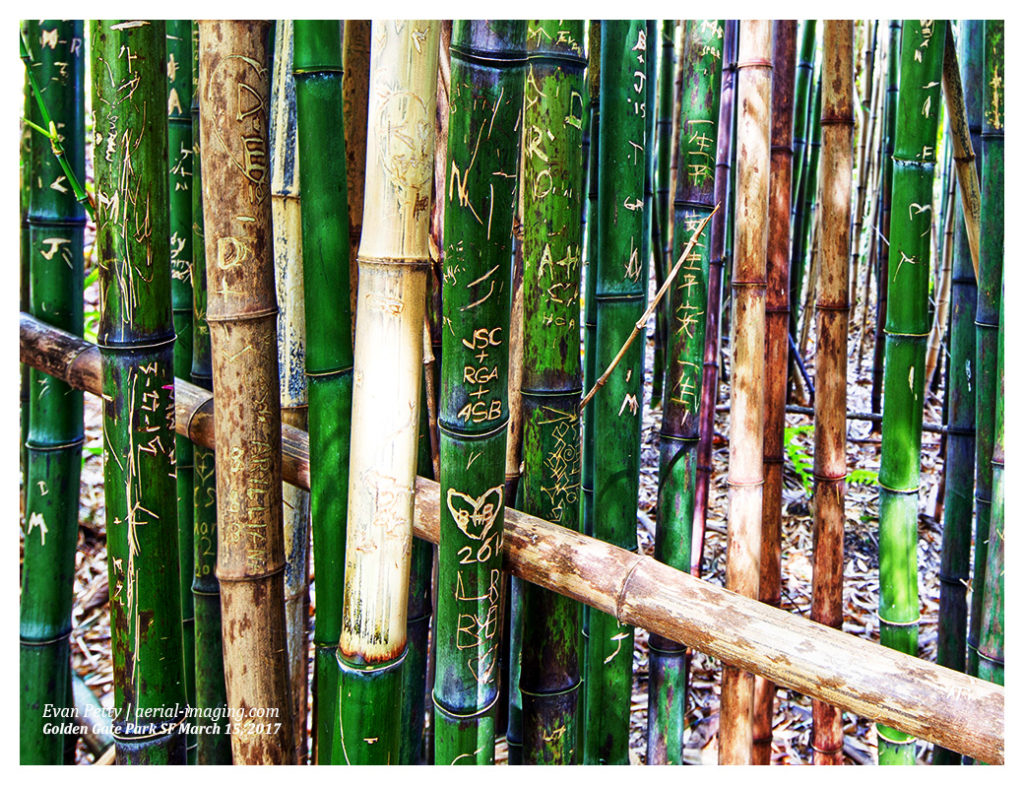Bamboo Grove Photography