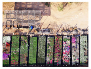 Desert Nursery Drone View