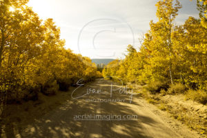June Lakes Sierra Mountain Bright Tree Photography
