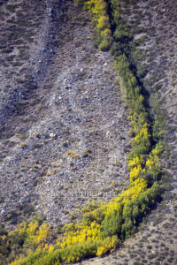 Mammoth Lake Aerial Bright Trees Photography